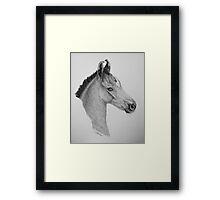 """Precious Little One"" - Marwari Colt Framed Print"
