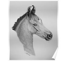 """Precious Little One"" - Marwari Colt Poster"