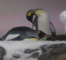 Melbourne Aquarium - King Penguins by skyhorse