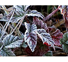 Frosty Morning at Kirk Park Photographic Print