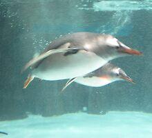 Melbourne Aquarium - Swimming Penguins by skyhorse
