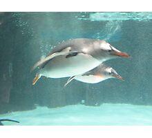 Melbourne Aquarium - Swimming Penguins Photographic Print