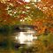 First signs of fall -- $ 20.00 Voucher for October- members only