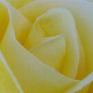 Lemon Petals by Cheryl  Lunde