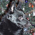Mr. Snugglebear's Christmas by OzzySkateboard