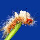 Caterpillar by Ken Boxsell
