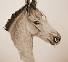 """""""Precious Little One"""" - Sepia by SD 2010 Photography & Equine Art Creations"""