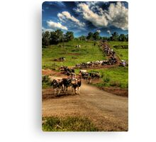 Cattle train Canvas Print