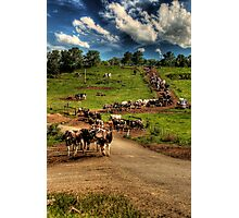 Cattle train Photographic Print