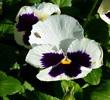 Fly On A Pansy by WildestArt