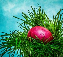 Red Easter egg in the grass by luckypixel