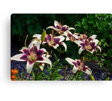 Purple And White Lilies Canvas Print