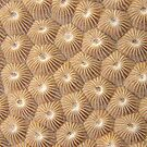 Stony Coral by Andrew Trevor-Jones