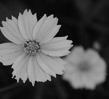 Flowers by Prathna