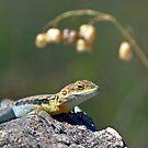 Dragon by Bill  Robinson