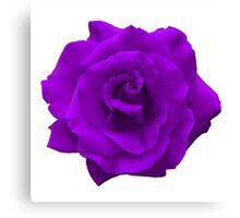Single Large High Resolution Purple Rose Canvas Print