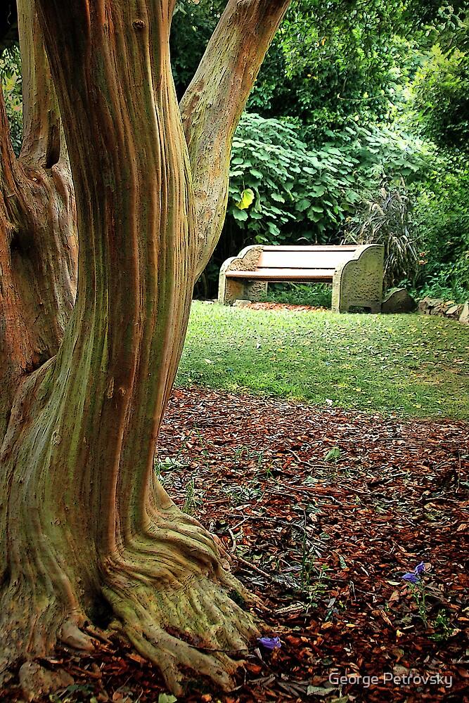 Crepe Myrtle Bench by George Petrovsky