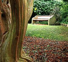 Crepe Myrtle Bench by George Petrovsky