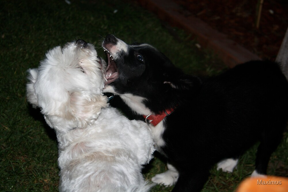 Wrestle Time by Maximus