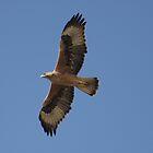 Bonelli's Eagle by David Clark
