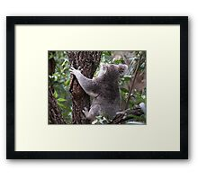 I Can't Bear to Watch Framed Print
