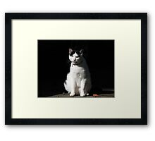 Black and White Cat Sitting Framed Print