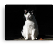 Black and White Cat Sitting Canvas Print