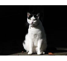 Black and White Cat Sitting Photographic Print