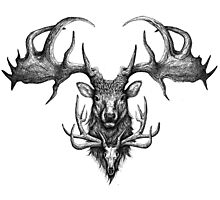 Graham's Ghost - Irish Elk and Elk Skull Photographic Print