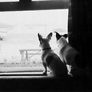 Friends by Mojca Savicki