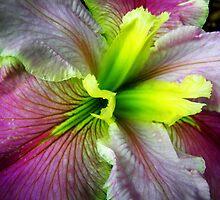 Louisiana Iris by JuliaWright