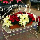 Poinsettias Setting on a Bench  by Chuck Gardner