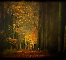 Misty light in woods  by Dirk Delbaere