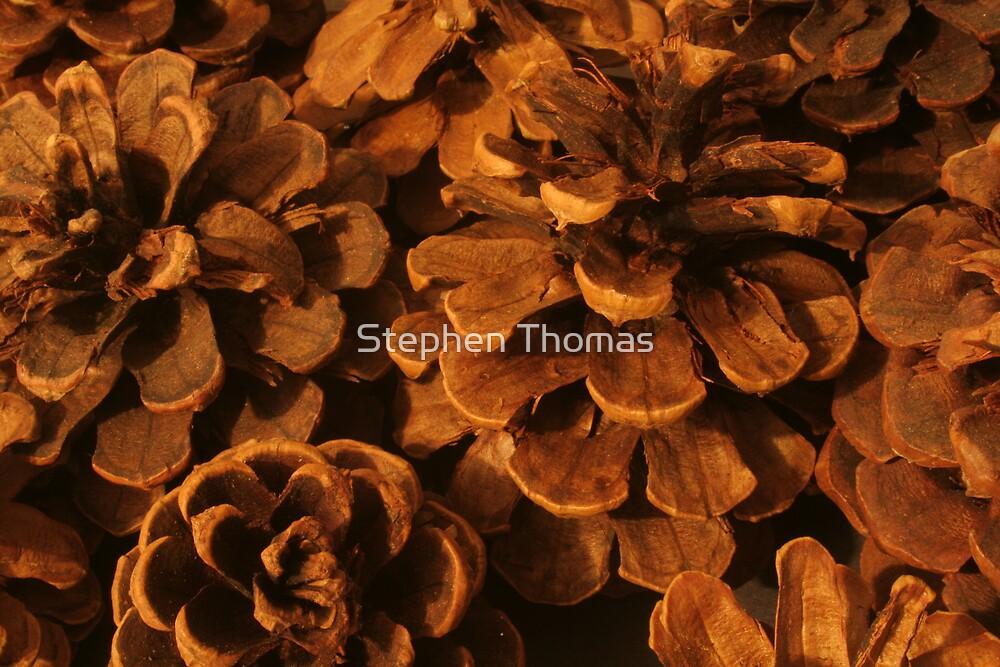 Beautiful Pine Cones by Stephen Thomas