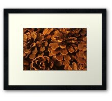 Beautiful Pine Cones Framed Print