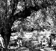 Willow Tree by Nicole Murdy