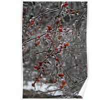 Red Frozen Berries. Poster