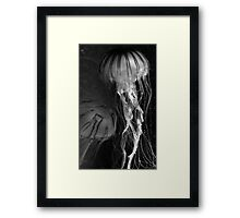 Black and White Jellies Framed Print