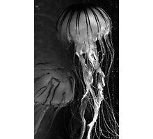 Black and White Jellies Photographic Print