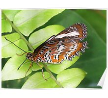 Orange Lacewing Butterfly (Cethosia penthesilea) Poster