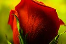 Simply Red by Ingrid Beddoes