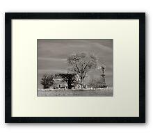 Shadows of the Family Tree Framed Print