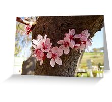 Blossoms in the Park Greeting Card