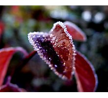 sparkling crystals of ice Photographic Print
