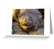 Galapagos Newborn Sea Lion Greeting Card