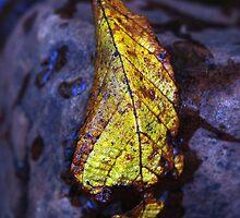 An Autumn Leaf by petersargison