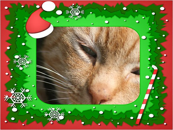 Christmas is for cats too by Robert Deaton