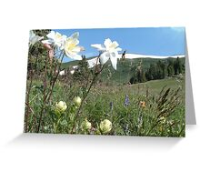 Mountains and Columbine Greeting Card