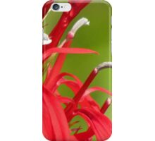 Cardinal Flower Details iPhone Case/Skin
