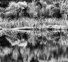 Gordon River Reflections - Black & White by Marilyn Harris